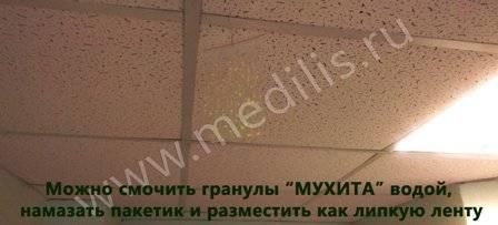 muhita_foto_5.jpg (31 KB)
