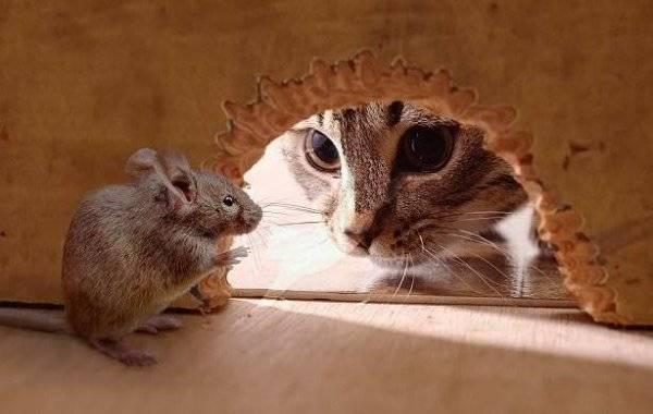 Чего бояться мыши