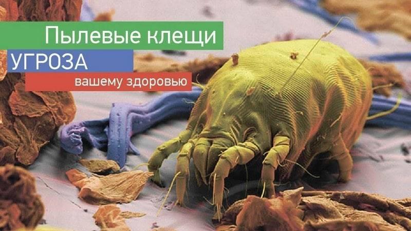 Чем опасны пылевые клещи